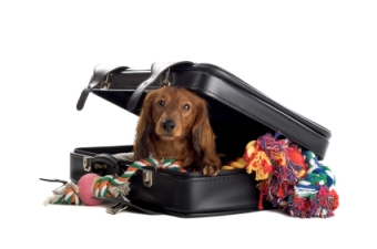 perro-dentro-de-una-maleta