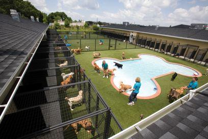pets-pool-facility