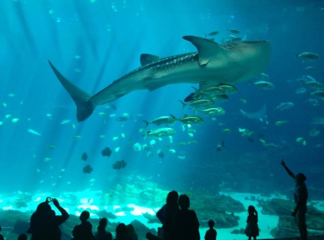 6 cosas que debes saber al visitar el acuario más grande del mundo